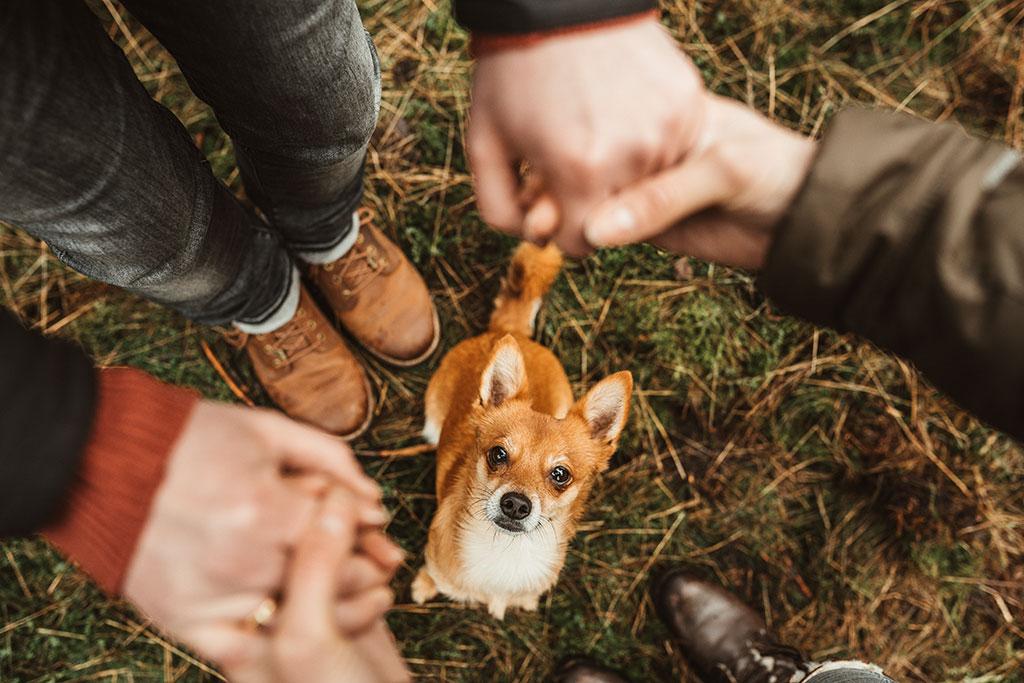 Paarfotografie in Siegen Hund Mensch