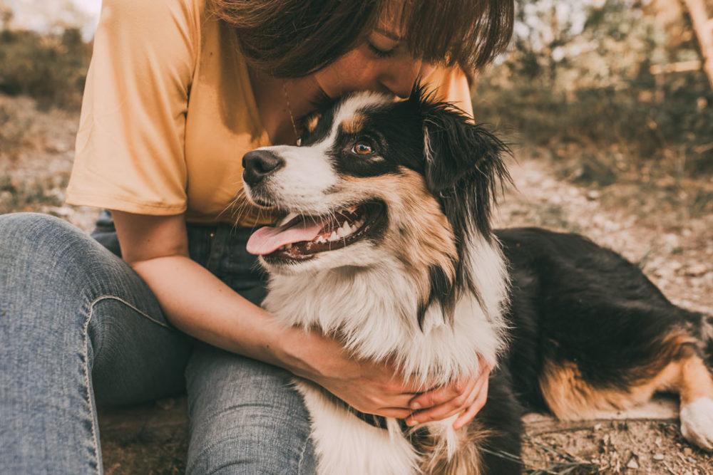 Tierfotograf in Siegen Hundeshooting